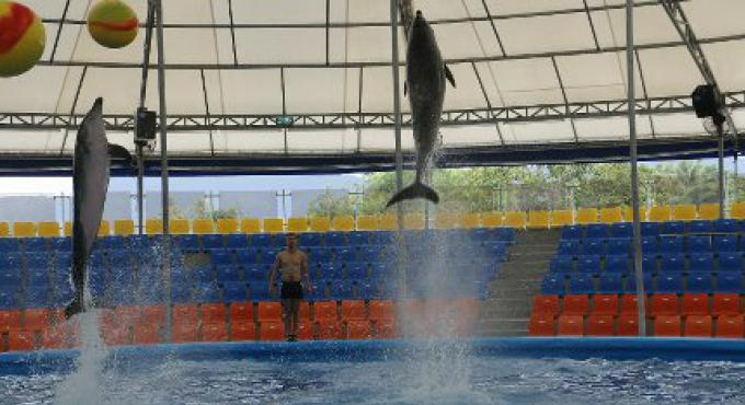 Opinion :Le dolphinarium de Phuket légitimité pour le spectacle