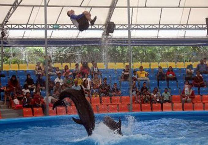 Dolphin Bay Phuket dolphinarium a ouvert