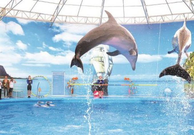 Reportage spécial: La contreverse du Delphinarium