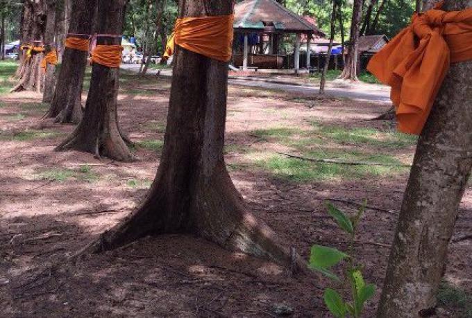 'Hollywood Museum' de Phuket en attente du plan pour abattre des arbres en bord de mer