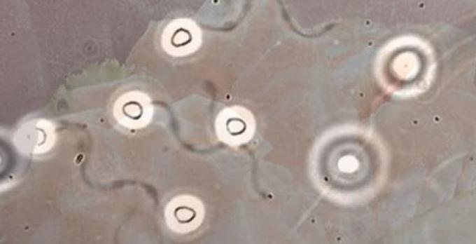 Le savon à base de sperme de saumon ferait blanchir la peau!!!