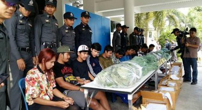 13 personnes ont arrêté dans une entreprise de transport de Phuket entrain de prendre du kratom