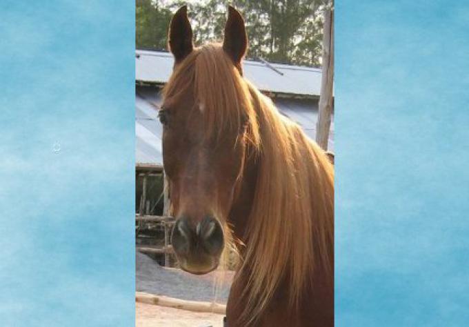 Une femme américaine en litige de plainte sur l'odeur du fumier de ses poneys, contre le bruit des