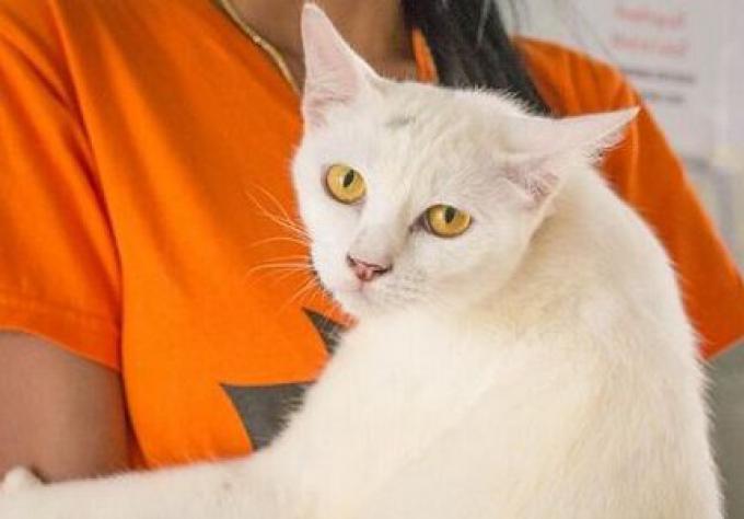 De Phuket à l'Autriche, les formalités du voyage d'un chat