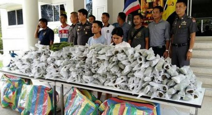 Un couple arrêté à Phuket en possession de plus de 100 kilos de kratom
