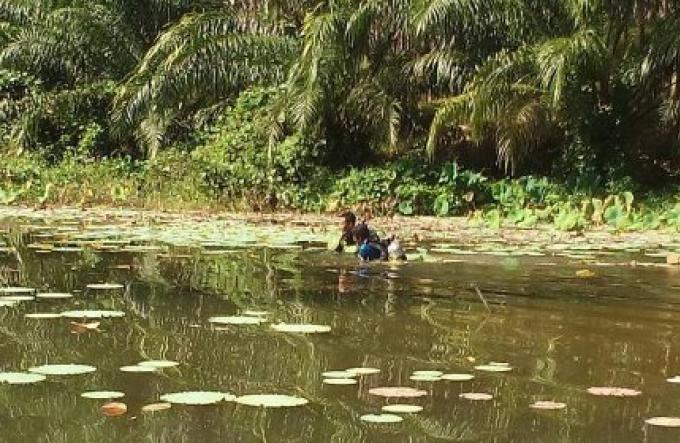 Un homme de Krabi  meurt en faisant une collecte d'escargots