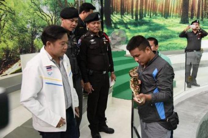 L'entreprise du spectacle de serpent indemnise la touriste chinoise qui a été mordu sur le nez par