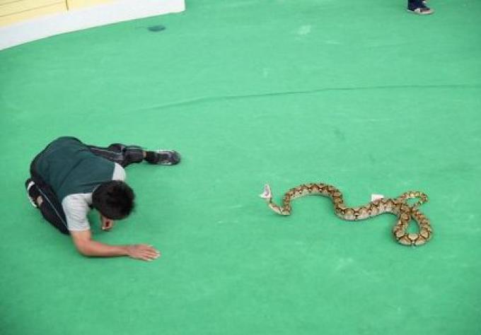 Le spectacle de Serpent où la touriste chinoise a été mordue, a été ordonné de fermer, d'autre
