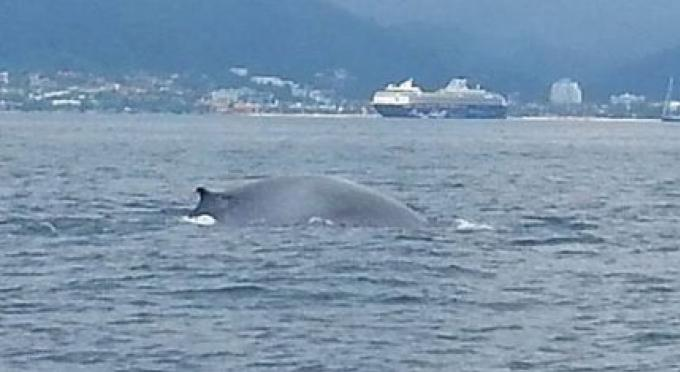 Une baleine signalée à Phuket