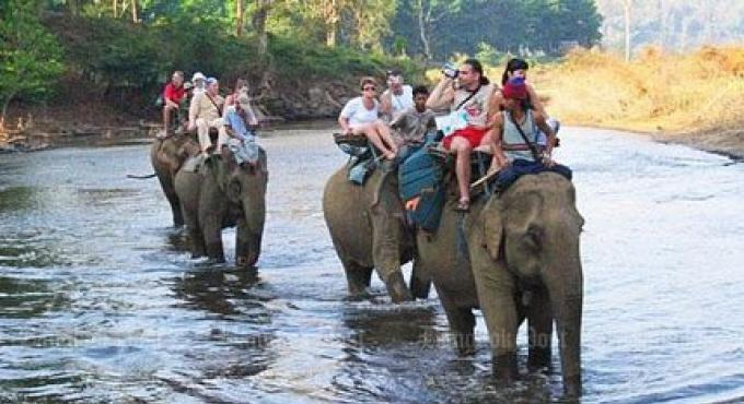 Un touriste écossais tué par un éléphant à Koh Samui
