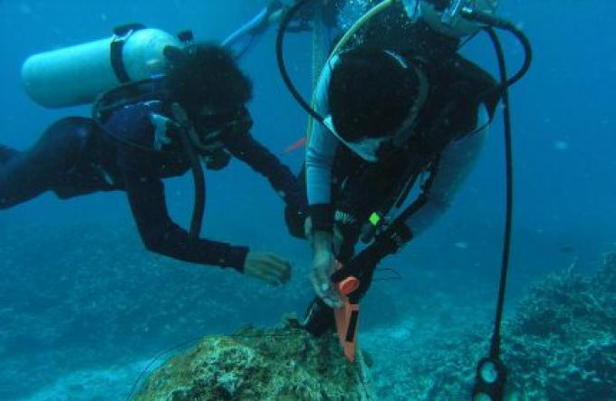 Le chef du parc de Phi Phi permet des sites de plongée suplémentaires