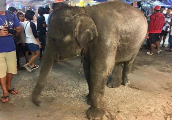 Voici pourquoi vous ne devriez jamais monter un éléphant en Thaïlande
