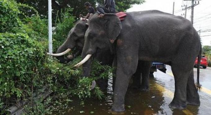 Le mahout fait face accusé dans la mort de tourisme de Samui