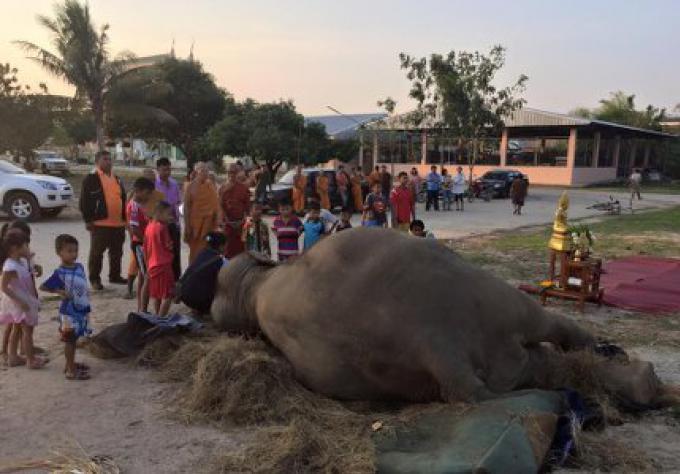 L'éléphant de l'attraction touristique de Pattaya meurt après avoir été effrayé par le feu d'a