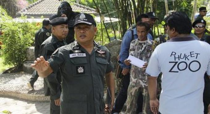 La recherche est lancée après que Milo l'orang outan «a disparu» du zoo de Phuket