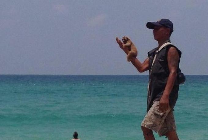 La police de Phuket recherche un rabatteur avec un loris lents sur Kata Noi Beach