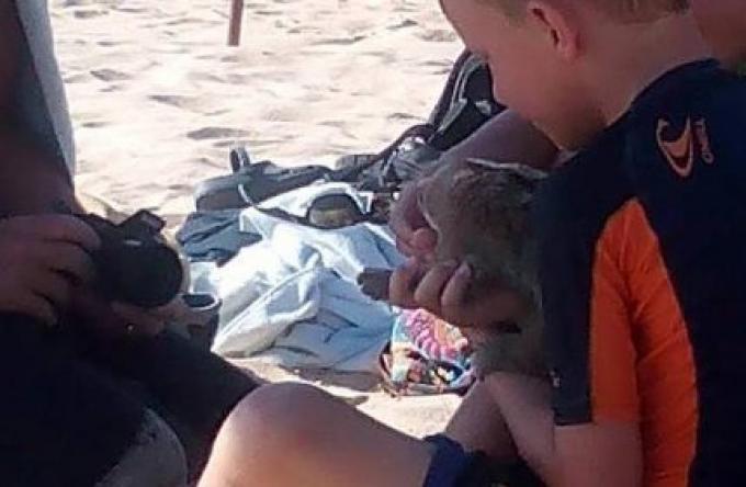 La police de Karon trop occupée pour mettre les rabatteurs de loris lents en cage