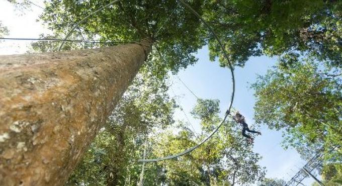A la cime des arbres
