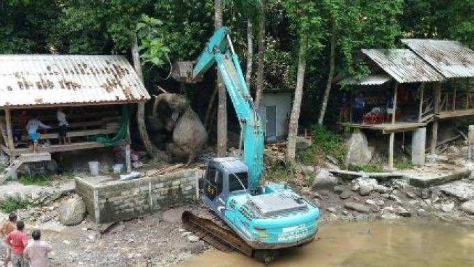 Un éléphant mâle retrouvé mort peut avoir été effrayé par le tir sur un héron