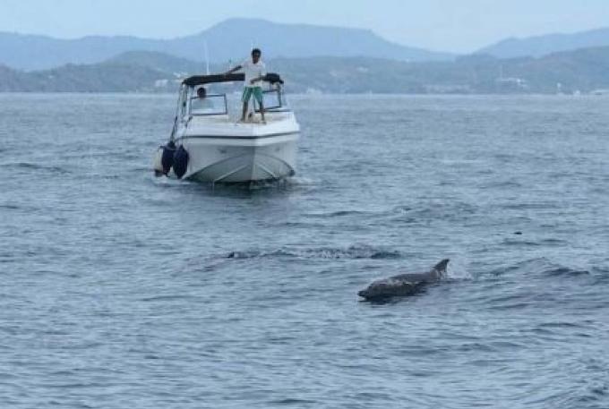 Les bateaux d'excursion ont été averti de rester à l'écart des dauphins au large de Phuket