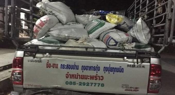 Contrebandier de corail présumé arrêté sur Koh Pha Ngan