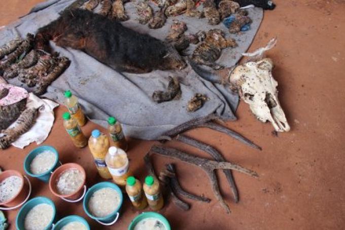 Horrible découverte au Tiger Temple: des dizaines de bébés tigres morts