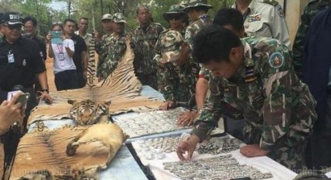Plus de tigrons trouvés morts au temple Tiger