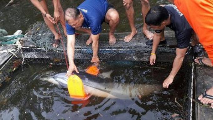 Un dauphin secouru sur Koh Lanta