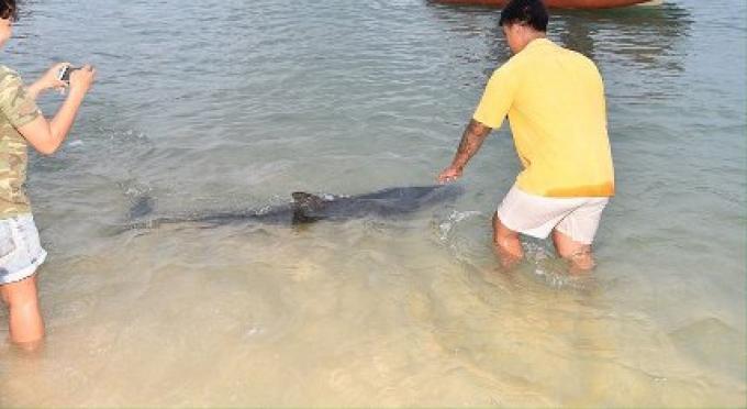 Impossible de sauver la femelle dauphin qui avait été récupérée au bord de la plage de Phuket