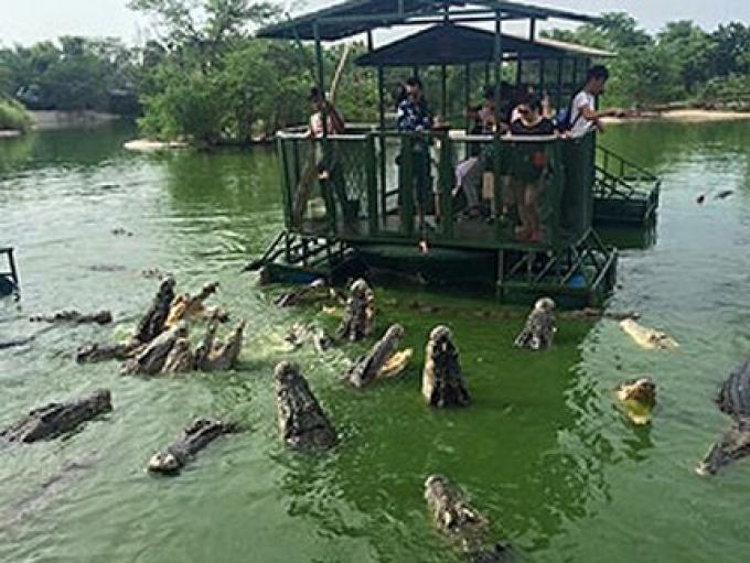 Alimenter les crocodiles par les touristes est sûr, les officiels insistent!