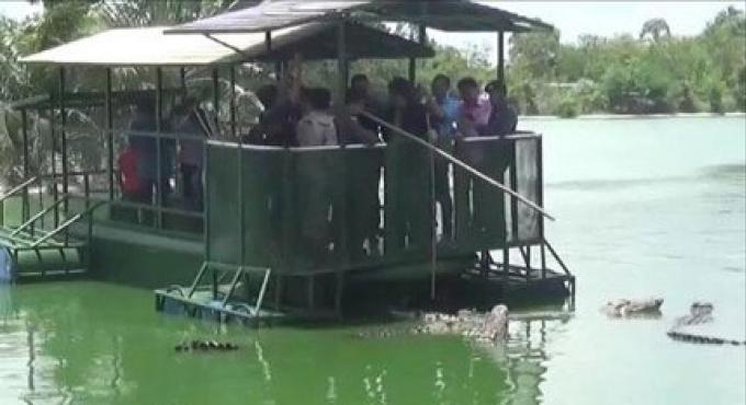 La licence pour la ferme agricole de crocodile de Pattaaya est suspendue