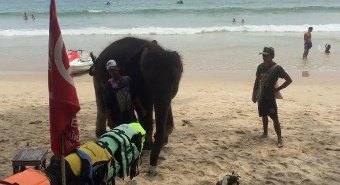 La police de Phuket est à l'affût d'un mahout et son éléphant