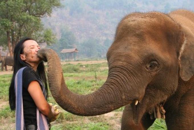 Le Phuket Parc Eléphant, le bien-être des pachyderme bientôt à Phuket