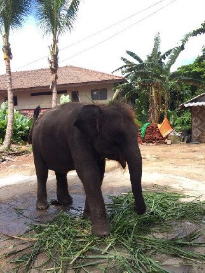 Le bébé elephant de la plage a été trouvé et saisi