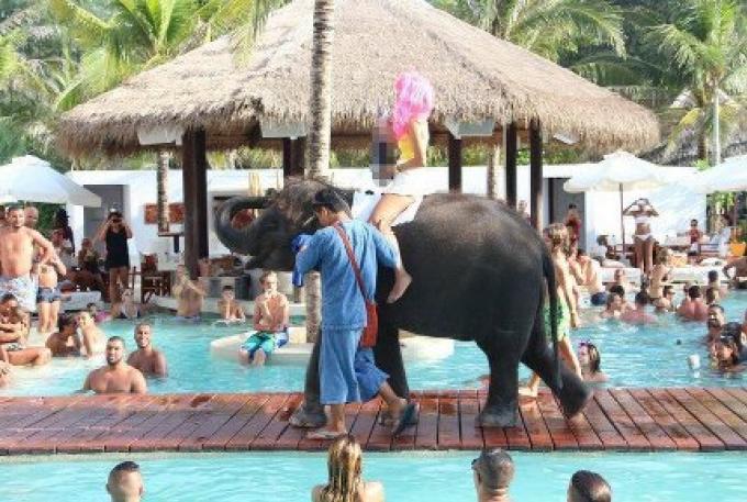 Les éléphants interdits au Nikki Beach Club de Phuket