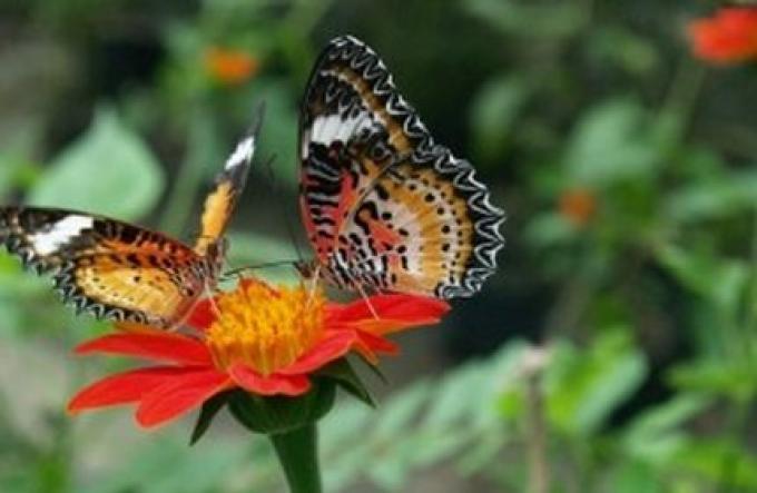Adieu Phuket Butterfly Garden