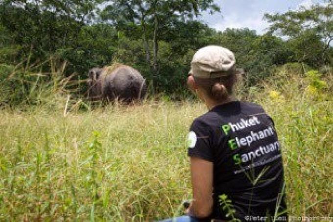 Les premiers éléphants bien arrivés dans leur nouveau sanctuaire de Phuket