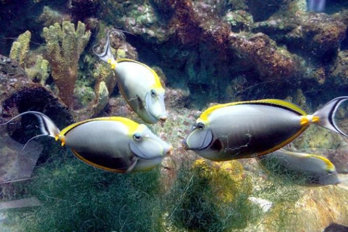 Aquarium de Phuket. Une folie a 79 millions de baths