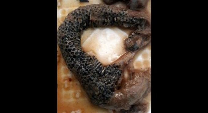 Le Pla Ra  était bien en fait du serpent
