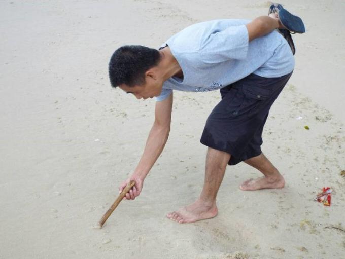 Invasion des plages de Phuket par des créatures marines : Ce ne sont pas des méduses disent les ex