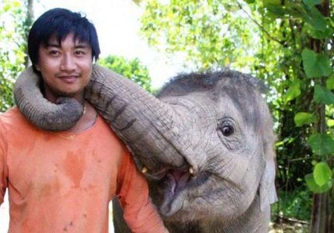 Les officiers vérifient les abus sur les éléphants de Phuket