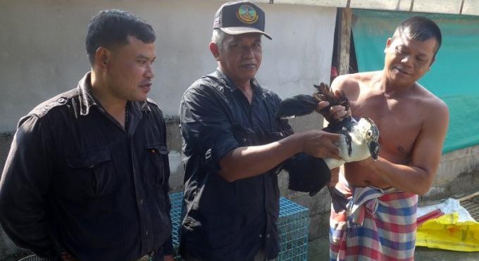 La capture d'un très rare canard a bosse à Kamala enthousiasme les habitants