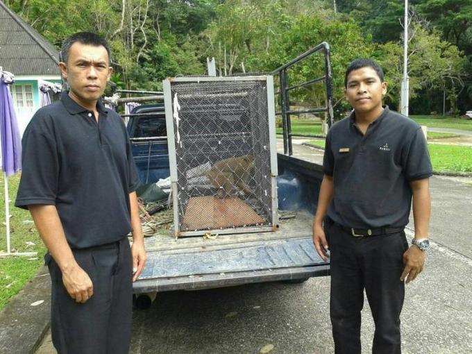 Le macaque sauvage retrouvé dans un resort sera relâché dans une réserve naturelle