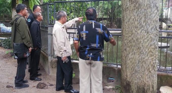 Bébés orang-outangs arrivés au zoo de Phuket, tout est légal