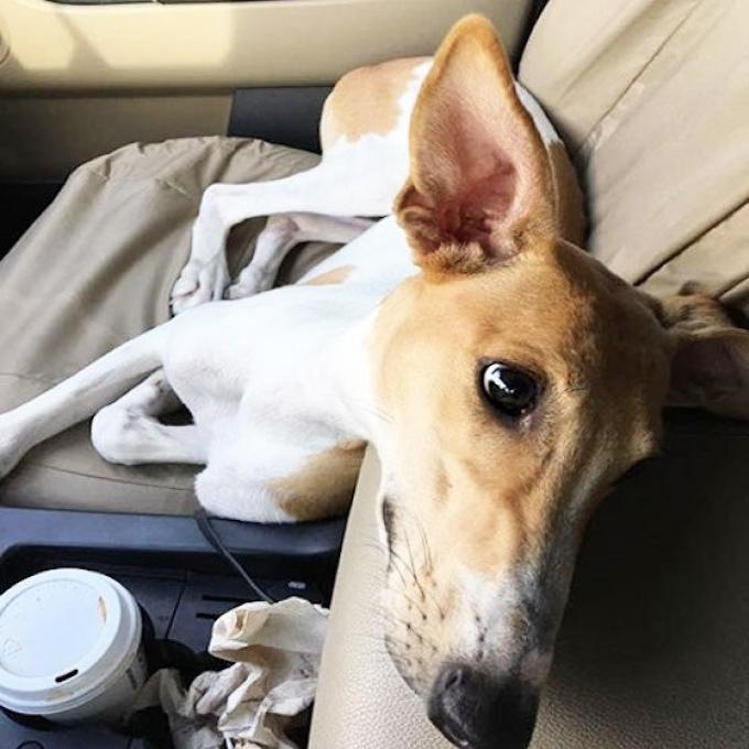 Soi Dog a la recherche d'adoptions pour des chiens secourus en Chine