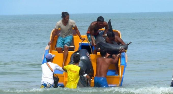 Un dauphin 'pucé' a été retrouvé échoué sur une plage de Phuket
