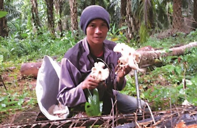 La très profitable saison des champignons