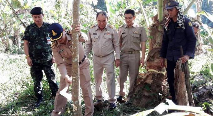 Des officiels rasent une plantation d'hévéas dans un zone forestière protégée