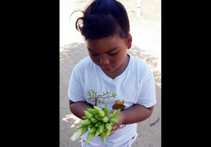 Rencontrez les autochtones: Recuperer avec le moon flower
