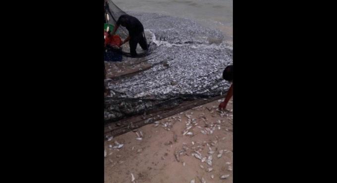 Une marée de poissons morts sur Patong Beach : 'il n'y a pas lieu de s'alarmer' disent les